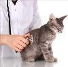 Ветеринарные клиники в Ядрино